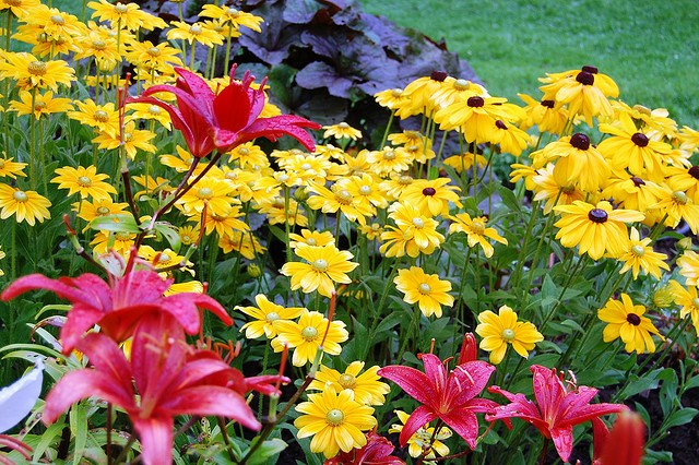 DIVIDING PERENNIALS – THE WHY AND HOW
