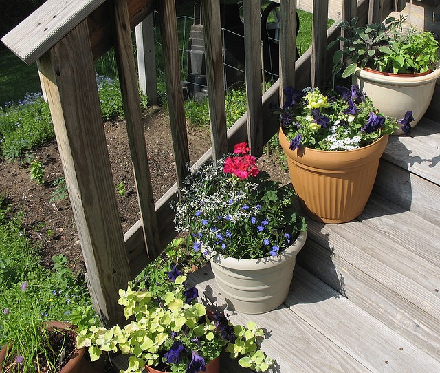 HOW TO CHOOSE THE BEST TYPE OF POT FOR CONTAINER GARDENING