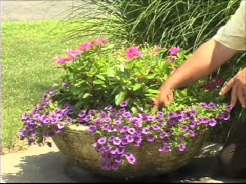 [VIDEO] WATERING AND CARING FOR CONTAINER GARDENS