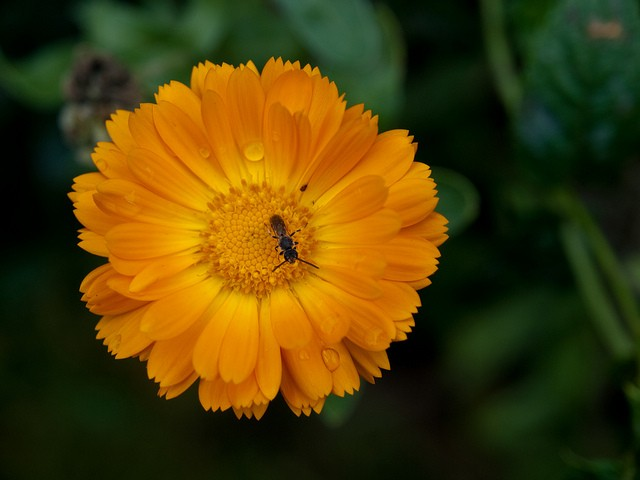 TOP 10 FLOWERS TO DETER PESTS