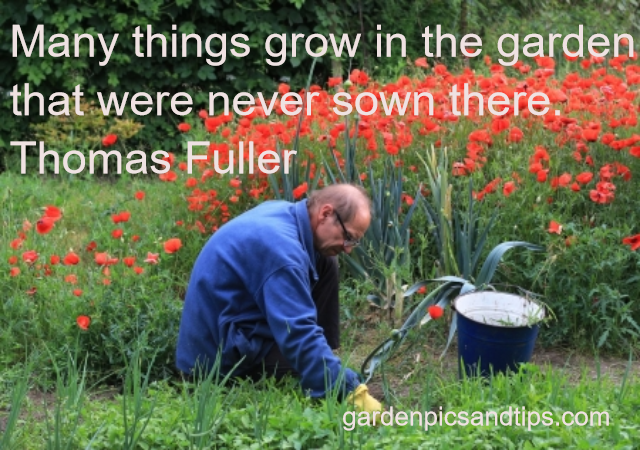 MANY THINGS GROW IN THE GARDEN…
