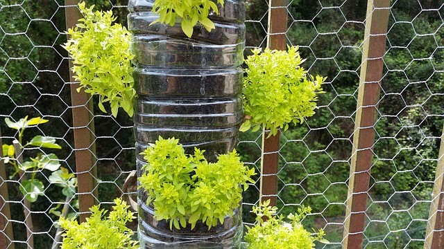 CREATE A VERTICAL GARDEN OR GREEN WALL IN FIVE EASY STEPS