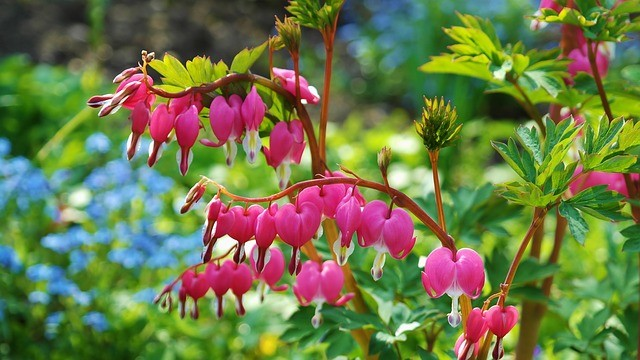 BEWARE THE BLEEDING HEART – AND THAT'S JUST ONE