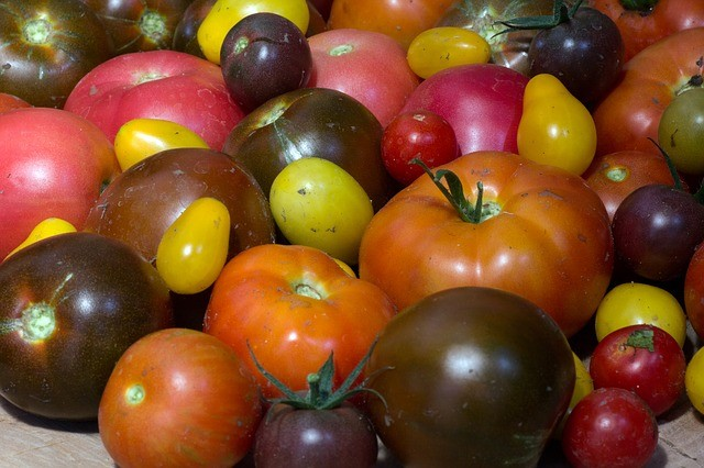 The Secret to Growing the Best Tasting Tomato