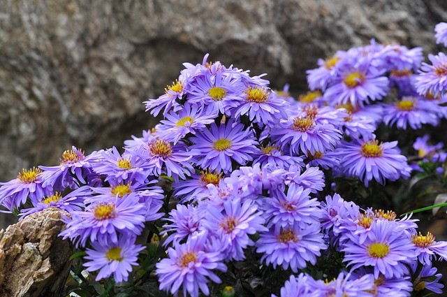 Top 11Fall Plants for a New England Garden