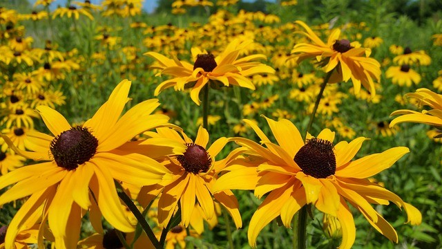 10 FLOWERS TO GROW FROM SEED NOW