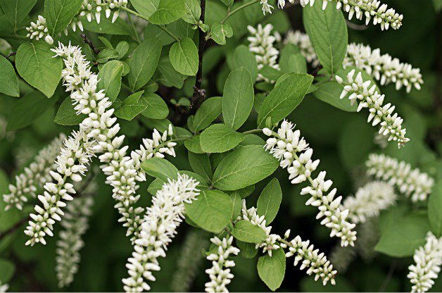 Top 10 Shrubs For A Small Garden Gardenpicsandtips Com