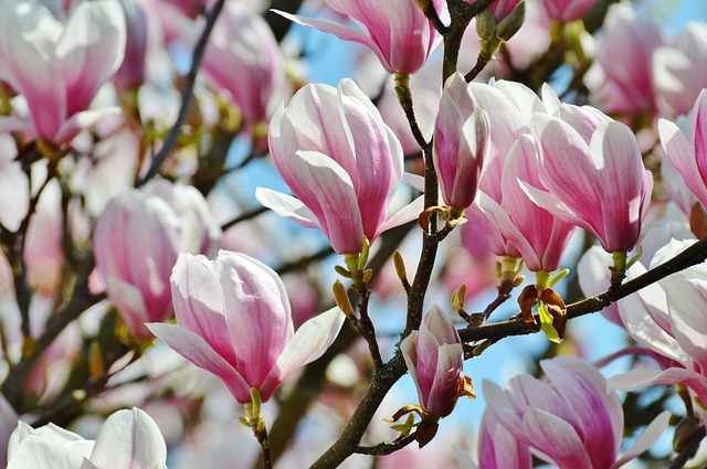 7 Flowering Trees To Enjoy This Spring