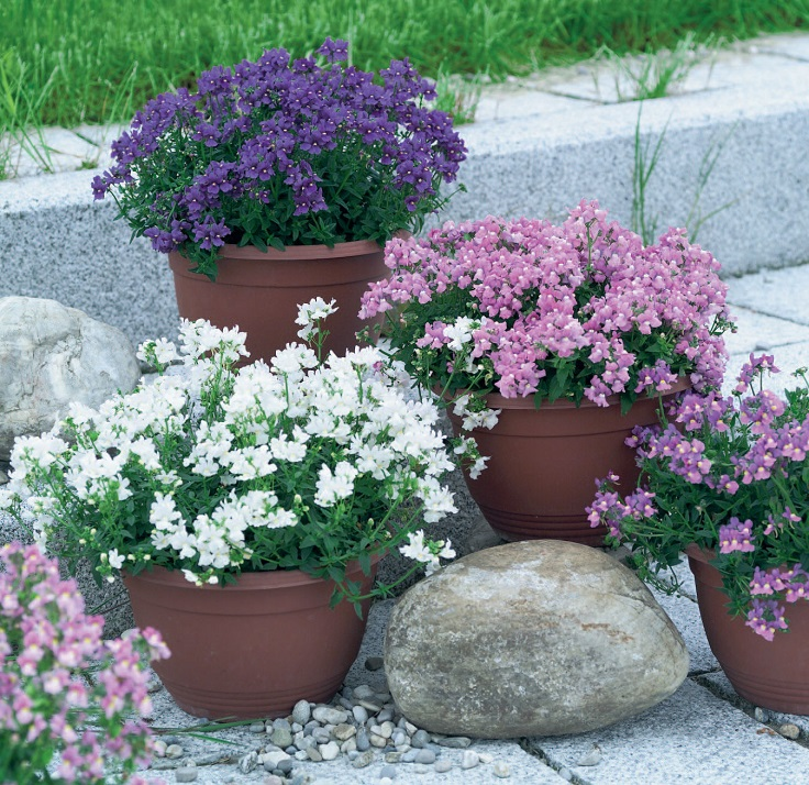 Best 10 Plants For A Small Container Garden