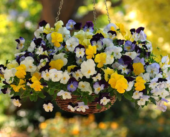 The 5 Secrets For Success With Hanging Baskets