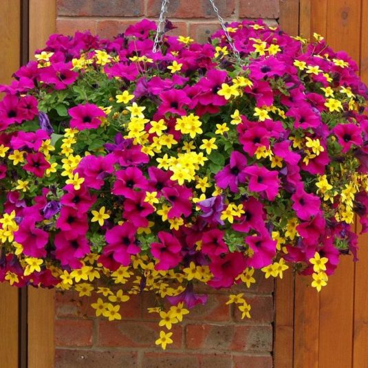 How To Create An Amazing Hanging Basket