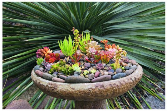 15 Amazing Succulent Garden Ideas
