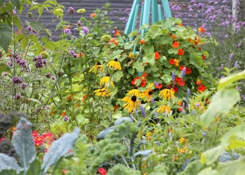 How To Create A Colorful Kitchen Garden Gardenpicsandtips Com