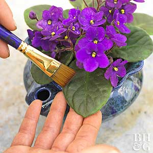 Top 5 Tips For Success With Houseplants