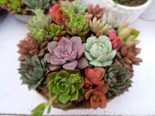 Top 8 Succulent Planter Schemes
