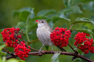 10 Tips to Turn Your Garden Into a Wildlife Sanctuary