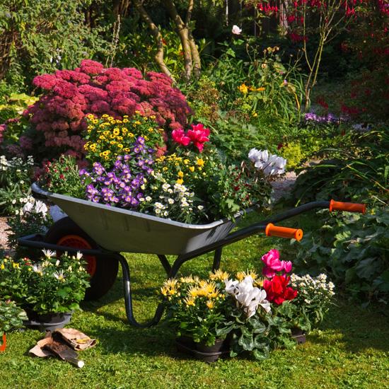 wheelbarrow planter 06