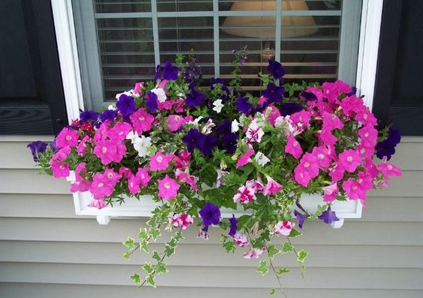 How to Create an Amazing Window Box for Your Home