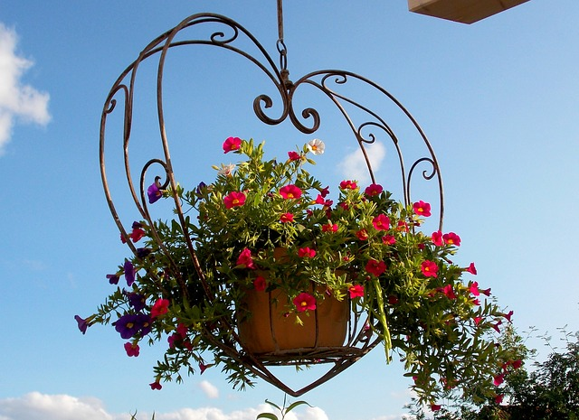 Top 25 Flowers for Hanging Baskets