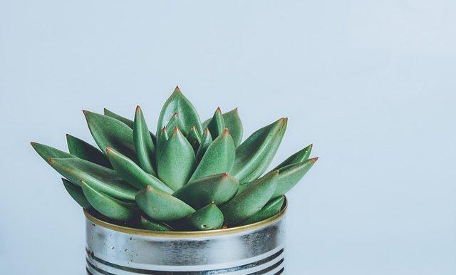 Small Space For A Garden? DIY Garden In A Mint Tin