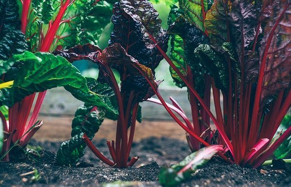 Tips for Growing Your Most Productive Garden Ever